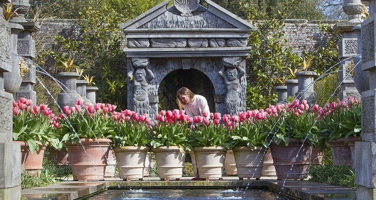 Arundel Castle Tulip Festival Returns